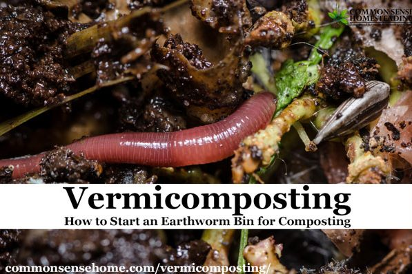 Vermicomposting (Worm Composting) - Which earthworm species work best for composting and how to keep them healthy and making great garden fertilizer.