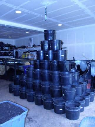vermicomposting worm bins
