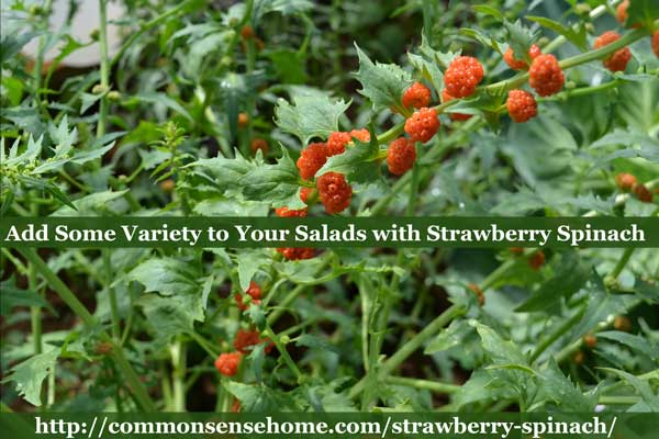 Strawberry Spinach - Also known as strawberry blite, this self-seeding annual adds color and texture to summer salads with its edible leaves and berries.