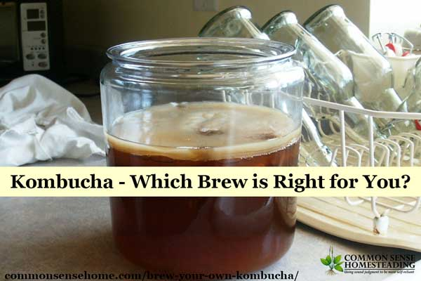 Brew Your Own Kombucha - Explanation of what kombucha is, how it tastes and how to make it; comparison of regular brewing versus continuous brewing.