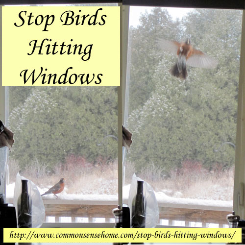 Things You Can Do to Prevent Window Strikes » Bird Watcher ...