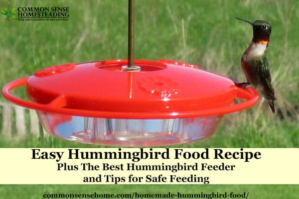 Homemade hummingbird food recipe and the best hummingbird feeder this homemade hummingbird food recipe is ready in minutes find out why i picked the forumfinder Image collections