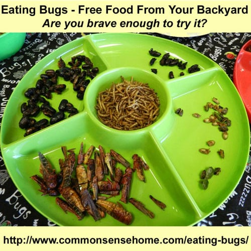 Eating Bugs - Free Food from Your Backyard