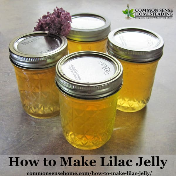 This easy Lilac Jelly recipe that can be adapted for other edible flowers. Turn an abundance of lilac blossoms into a unique edible gift or homemade treat.