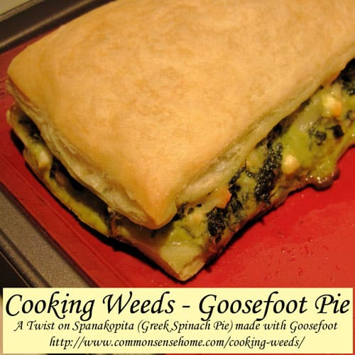 Cooking Weeds - Goosefoot Pie @ Common Sense Home