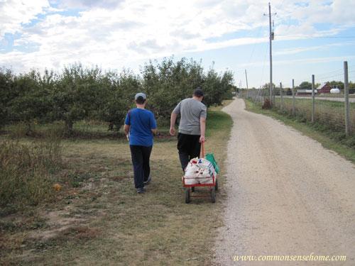 apple harvest and storage