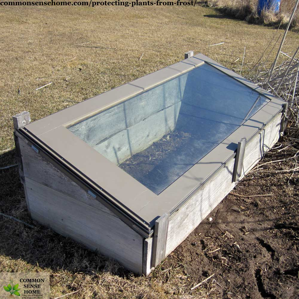 cold frame for frost protection