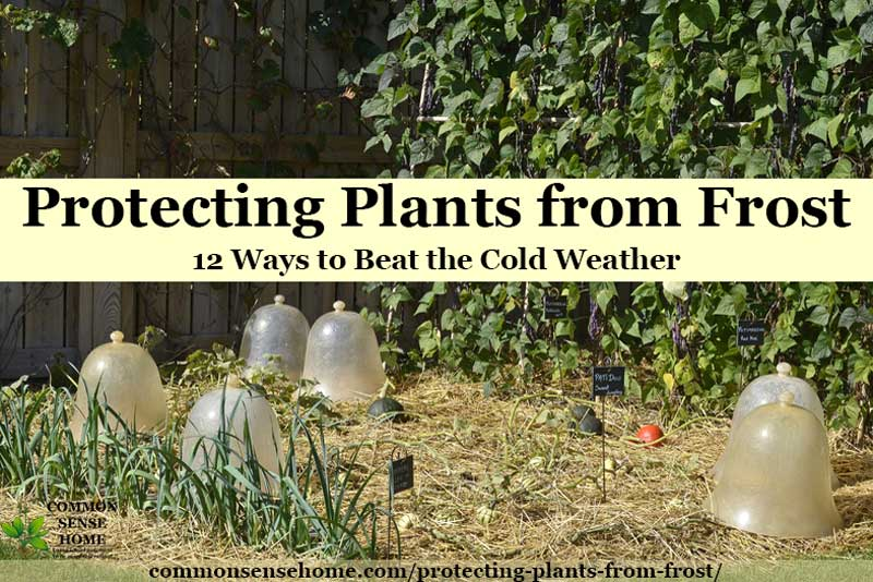 plastic cloches for cold weather plant protection