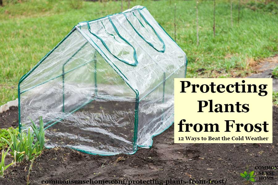 small plastic greenhouse for frost protection