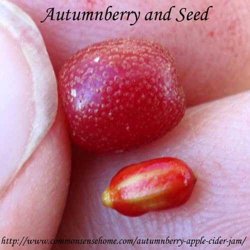 Autumnberry-seed