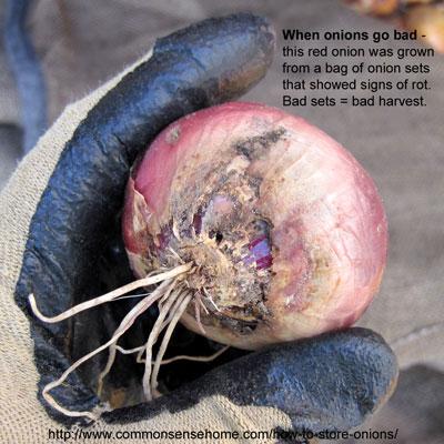 bad-onion