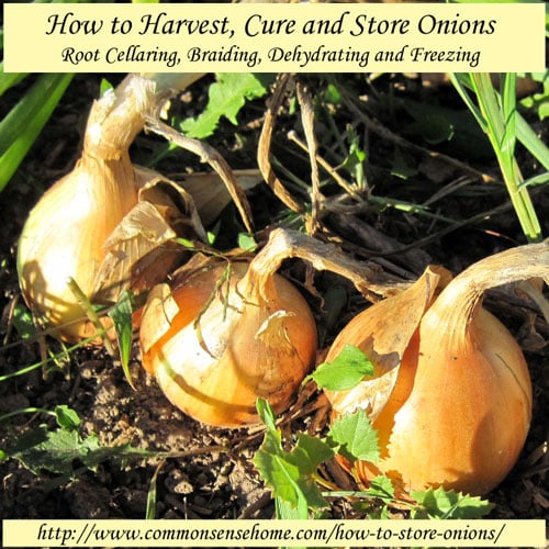how-to-store-onions