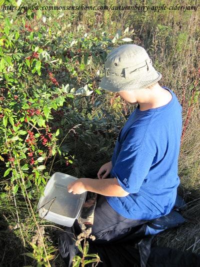 picking-autumnberries