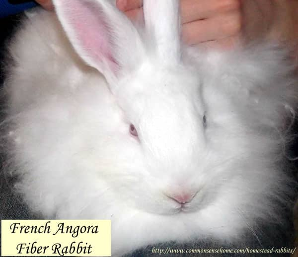 Homestead Rabbits - Which type is right for you? Raising rabbits is great for a small homestead because they take up very little space, make no noise and won't disturb neighbors