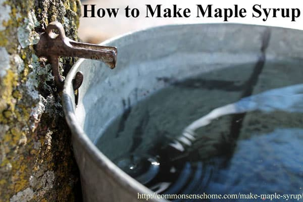Using maple syrup in recipes common sense homesteading - Fir tree syrup recipe and benefits ...