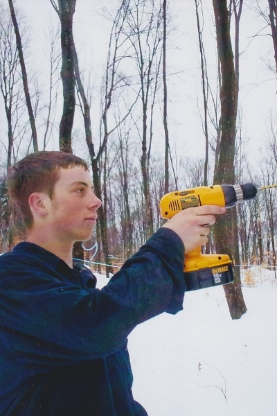 Using a cordless drill to tap maple trees
