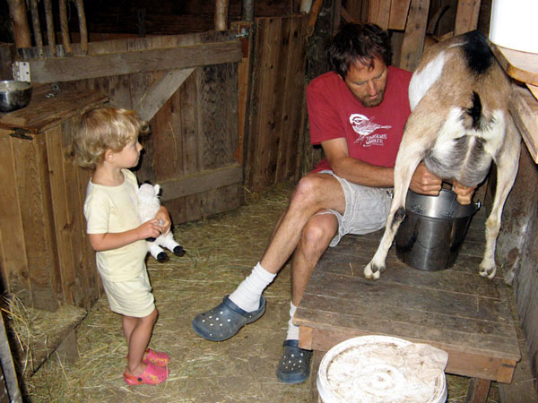 Dairy Goats - What breed should you choose? Five Popular Dairy Goat Breeds for the Homestead. Basic goat care - What Do You Need to Raise Goats?