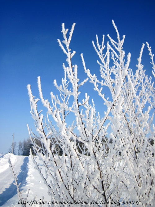 hoarfrost-in-winter
