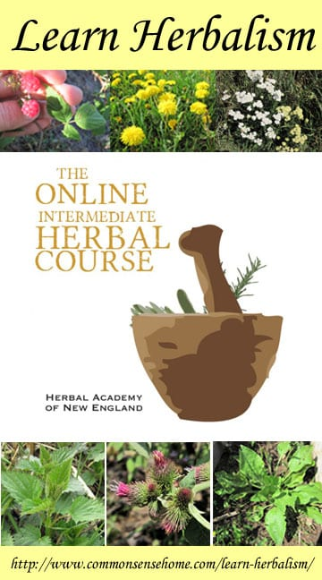 Learn Herbalism with the Herbal Academy of New England