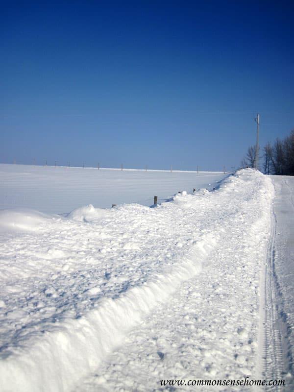 snow-fenceline