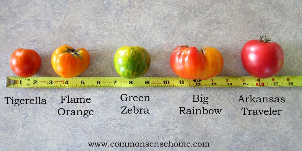 Comparison of different types of slicing tomatoes
