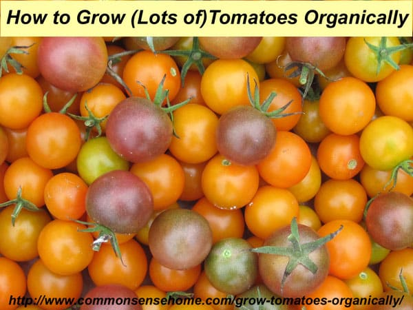 How to Grow Tomatoes Organically - From planting to harvest, 8 simple steps to Homegrown Tomatoes Without Chemicals, plus Innovative Gardening Techniques.