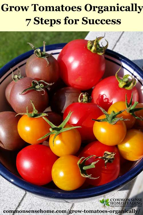 How to Grow Tomatoes Organically - From planting to harvest, 7 simple steps to Homegrown Tomatoes Without Chemicals, plus Companion Plants & Best Varieties