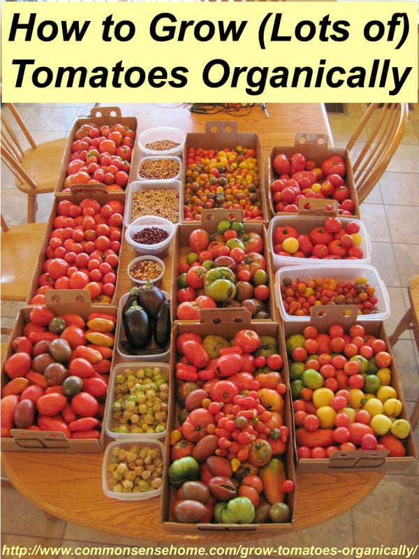 how to grow tomatoes organically   steps for success, Natural flower
