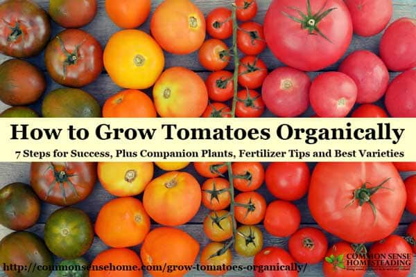 How to Grow Tomatoes Organically - From planting to harvest, 7 simple steps to Homegrown Tomatoes Without Chemicals, plus Companion Plants & Best Varieties.