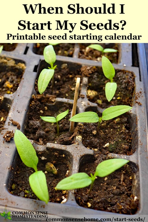 When should I start seeds? Seed starting tips with printable seed starting calendar. Covers indoor seeding, outdoor transplanting and outdoor seeding.