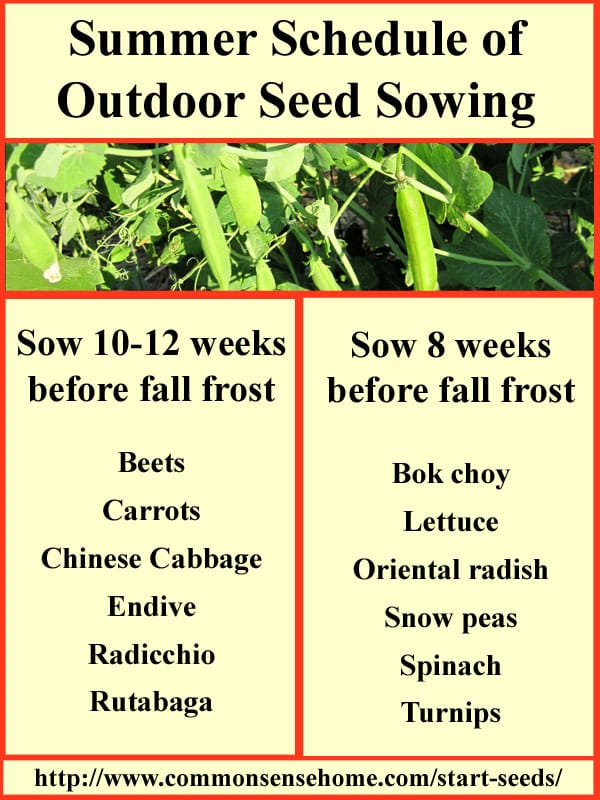 Summer Seed Sowing Chart