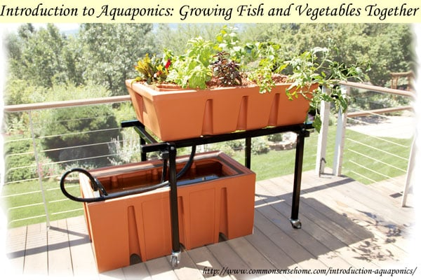 Introduction to Aquaponics: Growing Fish and Vegetables Together