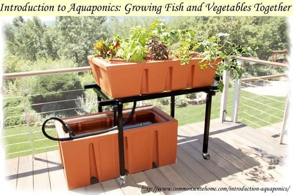 aquaponics-basics