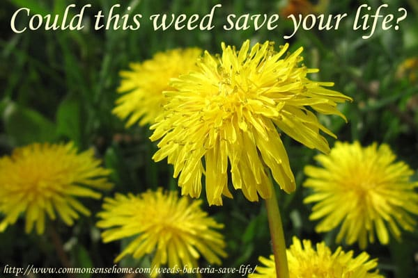 life-saving-weed
