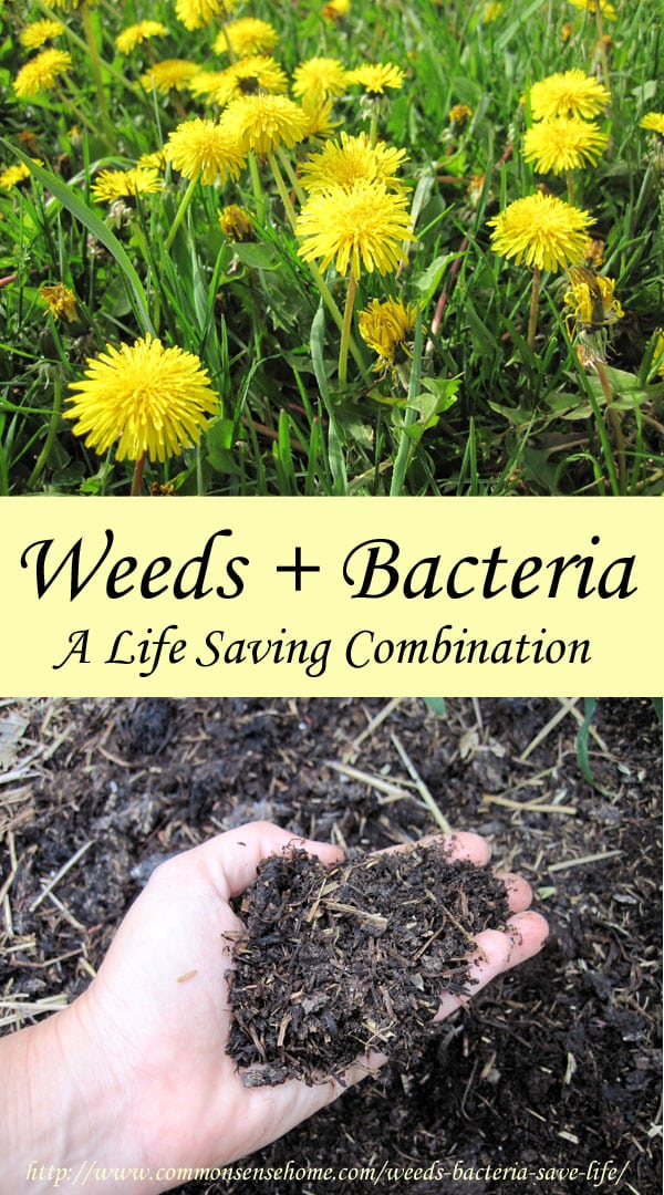 What if I Told You Weeds and Bacteria Could Save Your Life?  What you need to know about  wild plants and friendly bacteria.  The truth may surprise you.