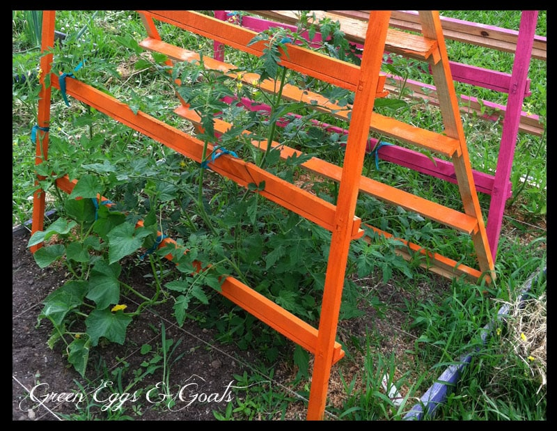 Tomato Garden Ideas 15 fun ideas for growing tomatoes Heather At Green Eggs Goats Turned Cast Offs From Her Husbands Work Into Colorful And Creative Trellises For Her Tomatoes And Other Garden Crops In Fun