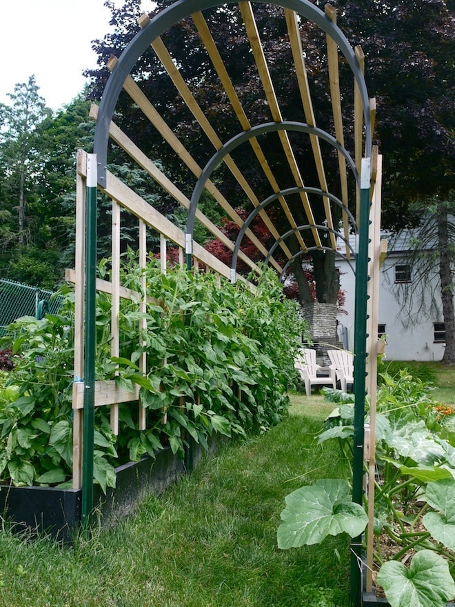 Trellis Gardening Ideas Part - 18: Check Out These Homemade Tomato Trellis Ideas That Are Wind
