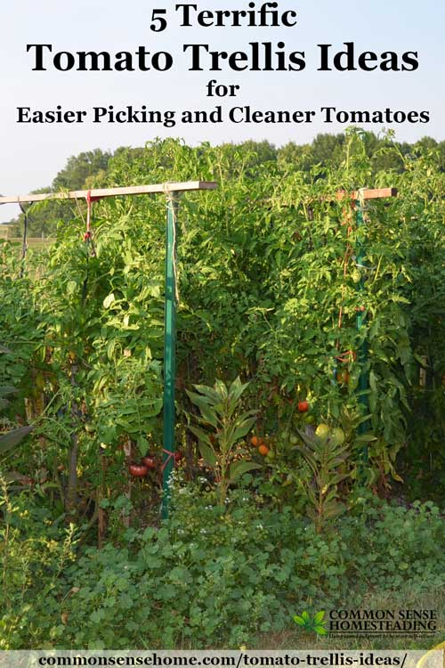 Check out these homemade tomato trellis ideas that are wind resistant, tall, short, funky and budget friendly to find the right one for your garden.