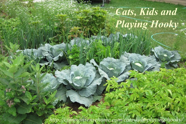 Cats, Kids and Playing Hooky - A not so serious look at our feline companions, garden and other homestead happenings.