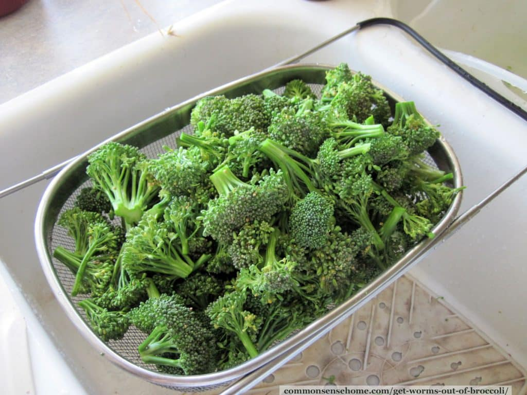 straining broccoli to remove broccoli worms