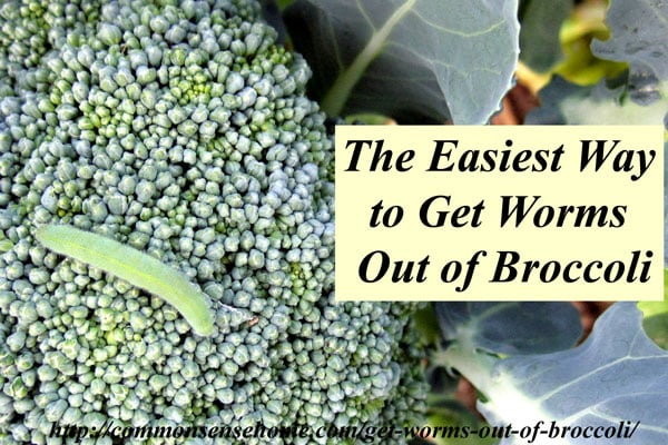 The Easiest Way to Get Worms Out of Broccoli - use this simple kitchen trick to get rid of unwelcome green beasties in your produce.