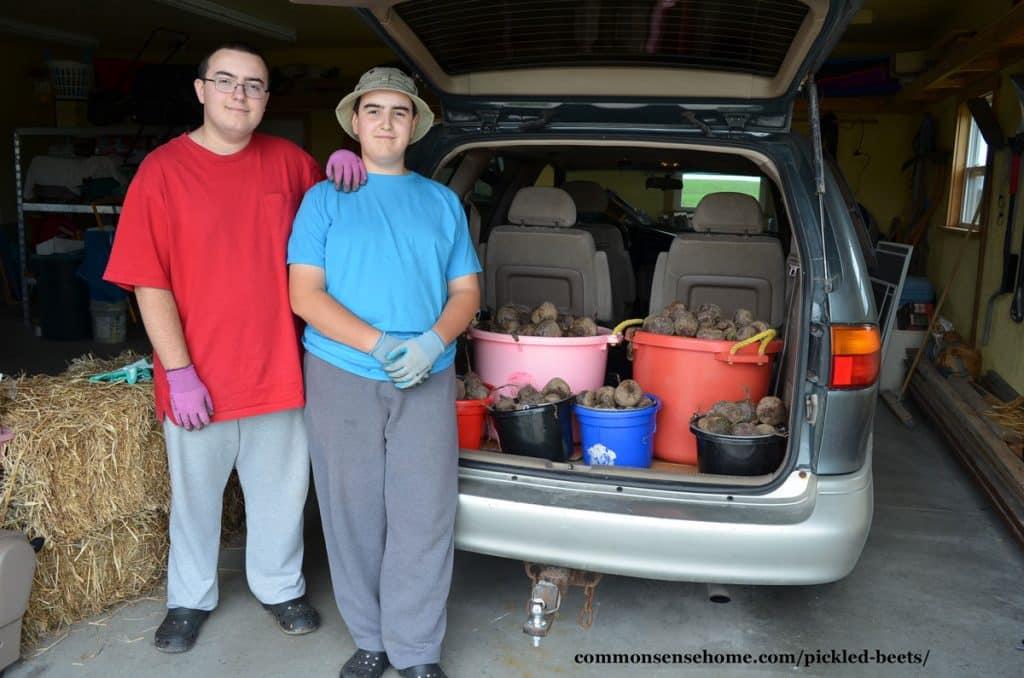 Beet pickers with van full of beets