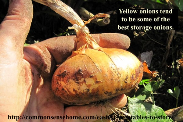 Easiest Vegetables to Store - Onions