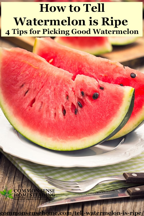 Good watermelon or bad watermelon? 4 Clues to tell watermelon is ripe on the vine or at the grocery store or farmers market, plus how to store watermelon