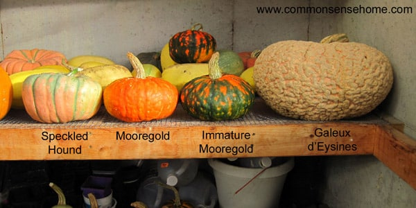 The Easiest Vegetables to Store - Winter Squash
