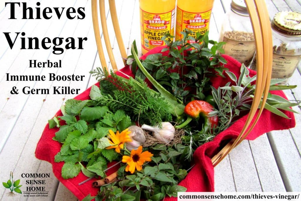 thieves vinegar herbs