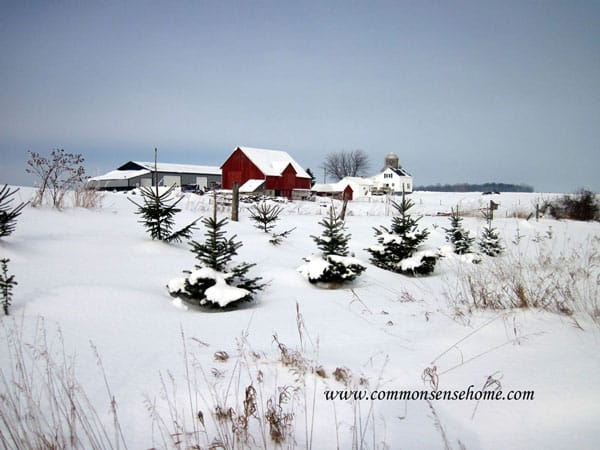 Plant windbreak trees to shelter and protect your home.