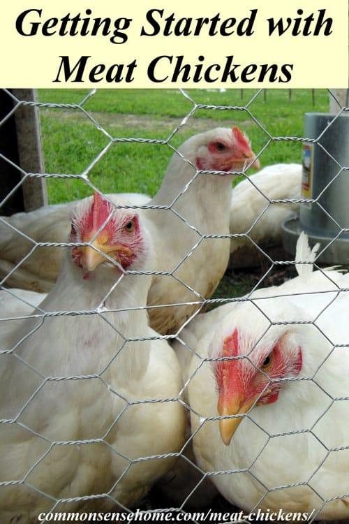 Recommended books, equipment and links to over 60 homestead chicken posts on the web covering everything from chicks to chicken diapers.