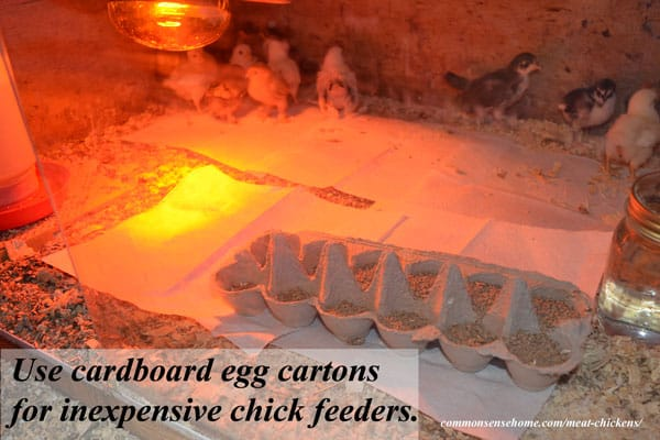 Getting Started with Meat Chickens - What you need to know about Housing, Equipment, Feed, Water, Bedding & safe handling of baby chicks for your homestead.