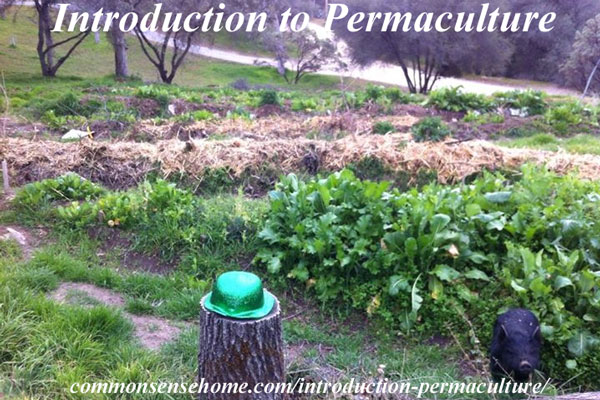Introduction to Permaculture - Permaculture (permanent agriculture) is an ethical, sustainable food system. Learn how one family is transforming their own land and helping to teach others.